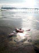 Tide comes in